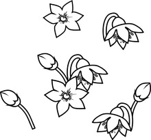 Coloring Page With Pepper Flowers