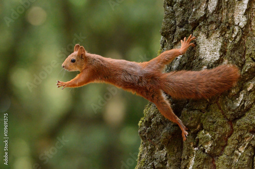Tuinposter Eekhoorn Squirrel sitting on a tree