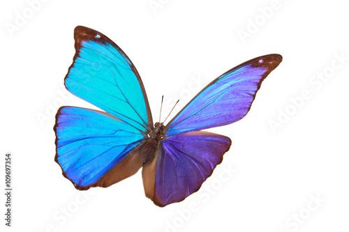 Fototapeta Blue tropical butterfly.
