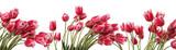 Fototapeta Tulipany - Flower field