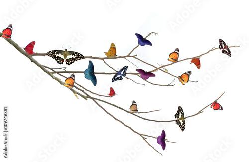 Fotografie, Obraz  Motýl