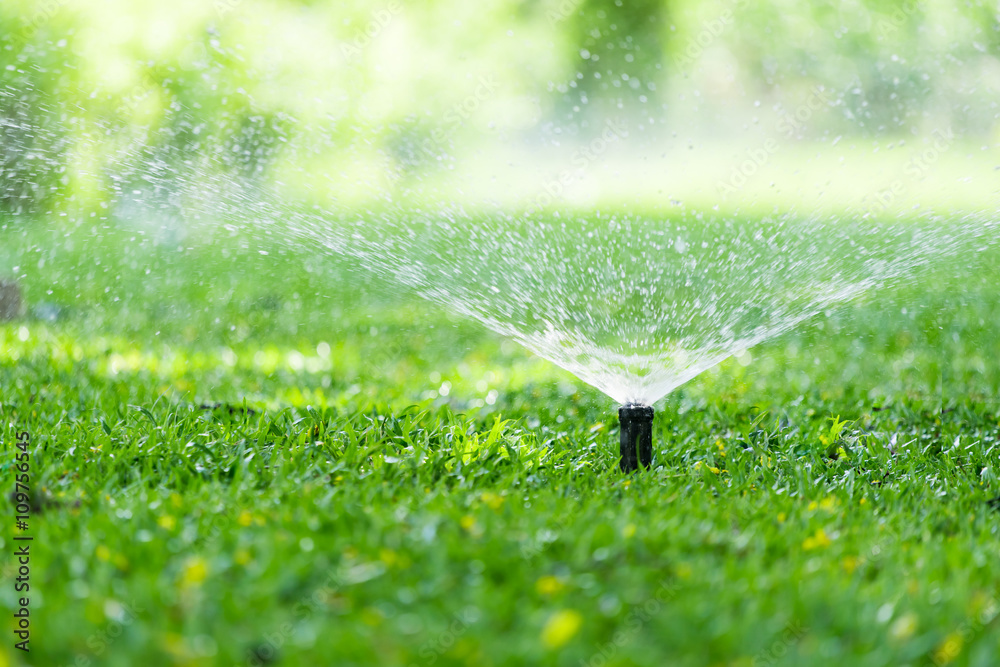 Fototapety, obrazy: Garden Sprinkler Watering Grass. Automatic Sprinklers, Lawn Sprinkler in Action, Background Concept.