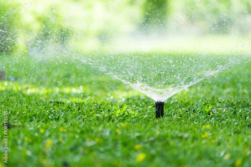 Obraz Garden Sprinkler Watering Grass. Automatic Sprinklers, Lawn Sprinkler in Action, Background Concept. - fototapety do salonu