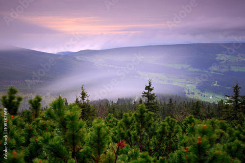Poster Purper Krkonose mountain, forest in the wind, misty landscape, with fog and clouds, mountain pine, Czech Republic, central Europe