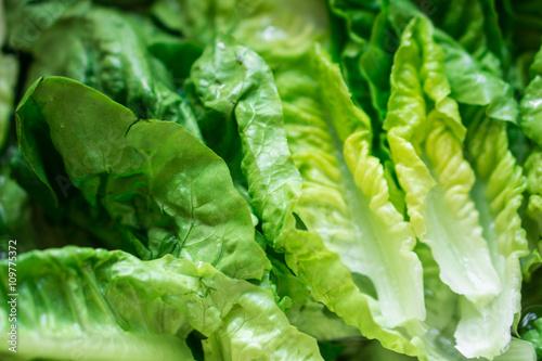 Blur Green Romaine Lettuce leaves, vegetable background