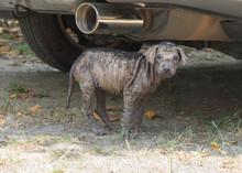 Baby Mangy Dog Hide Under Car ...
