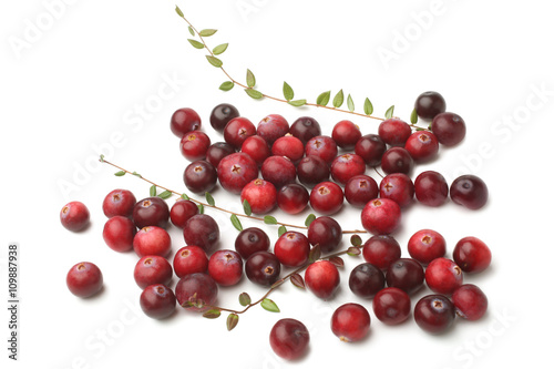 Stampe  Ripe cranberries with leaves