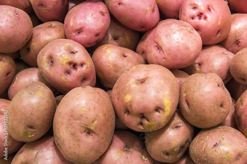 Fotografie, Obraz  red potatoes from market shelves real with flaws and bruises