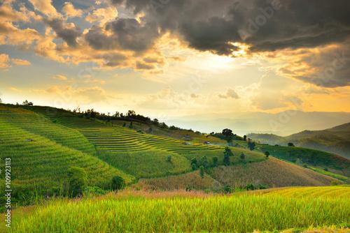Spoed Foto op Canvas Blauwe hemel Cornfield sunset of Thailand.