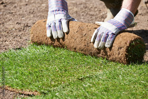 Fotografie, Obraz  Close Up Of Landscape Gardener Laying Turf For New Lawn