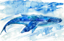 Big Blue Whale And Water.Watercolor Hand Drawn Illustration. Realistic Underwater Animal Art.