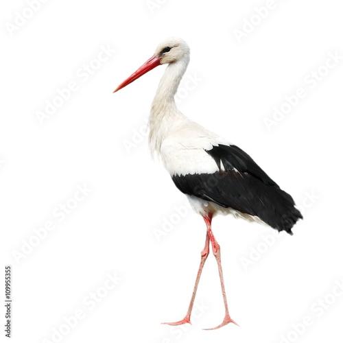 Fotografie, Obraz White Stork isolated on white, Ciconia ciconia
