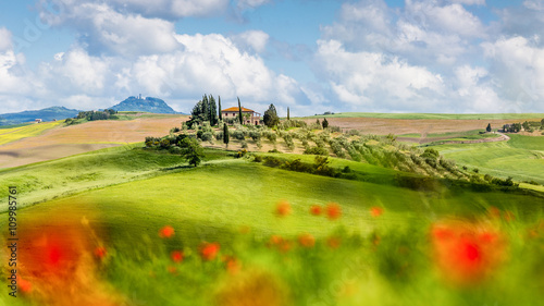Obraz Blühende Landschaften in der Toskana - fototapety do salonu