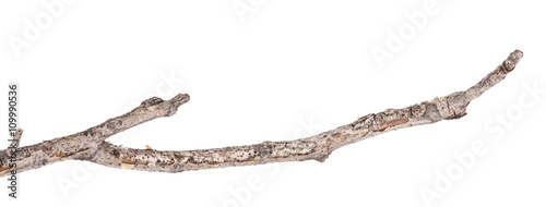 Valokuvatapetti Dry tree branches isolated not a white background