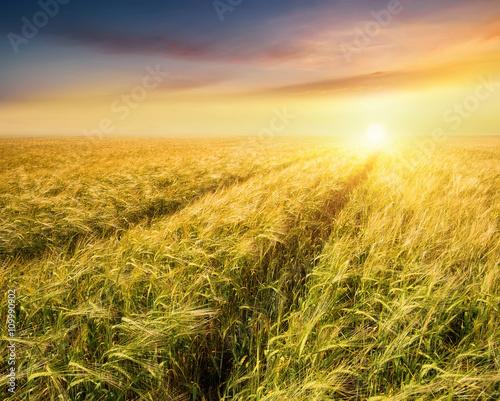 Staande foto Meloen Road on field. Agricultural landscape in the summer time
