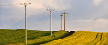 Electricity Poles In An Agricultural Field