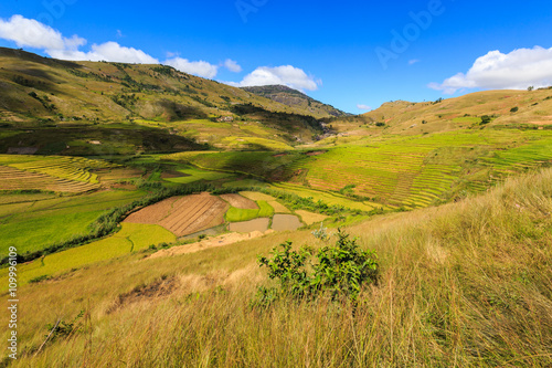 obraz lub plakat Landscape with rice fields in central Madagascar