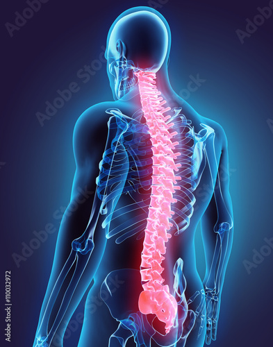 Fotografía 3D illustration of Spine, medical concept.