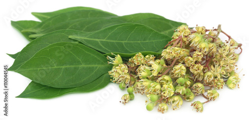 Photo  Ayurvedic henna flower with leaves