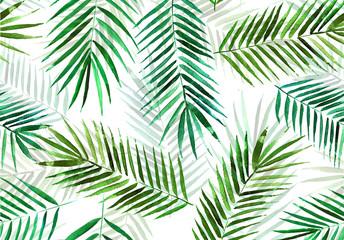 fototapeta szkic gałęzi palmy na białym tle