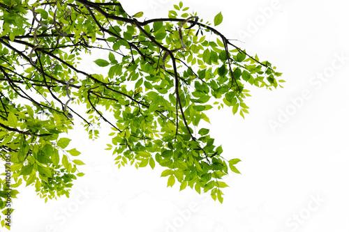 Fotografía  Leaf isolated