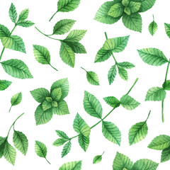 Panel SzklanyWatercolor vector seamless pattern hand drawn herb mint .