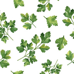 Fototapeta Liście Watercolor vector seamless pattern hand drawn herb cilantro .