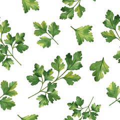 FototapetaWatercolor vector seamless pattern hand drawn herb cilantro .