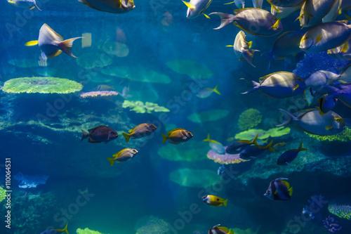 ryby-w-akwarium-w-bangkoku