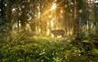 Hirsch in nebligem Wald
