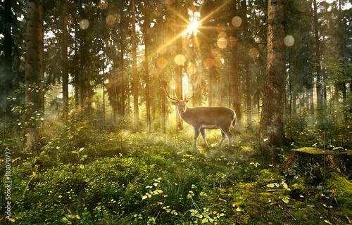 Deurstickers Bos Hirsch in nebligem Wald
