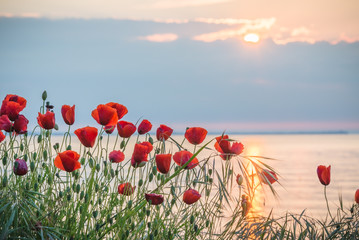 FototapetaPoppies on the sea shore at sunrise