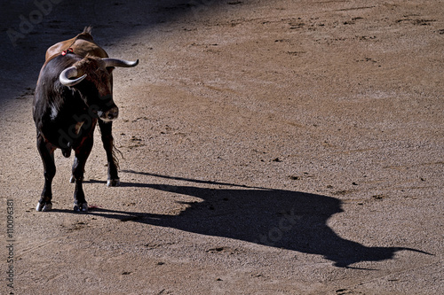 Photo sur Aluminium Corrida Toro at sunset, casting its shadow on the sand of the bullring