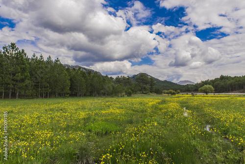 doğada ilkbahar canlılığı Poster