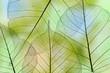 a leaf texture close up