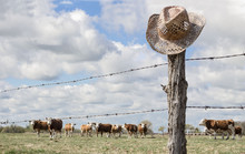 Horizontal Image Of A Cowboy Hat Hanging On A Fence Post In The Forefront While Cows Are Grazing In The Background Behind The Barbwire Fence In The Summer Time.