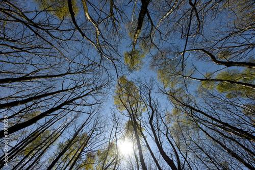 Foto  Woodland