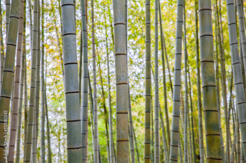 beautiful-bamboo-forest-at-arashiyama