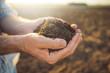 Leinwanddruck Bild - Handful of arable soil in hands of responsible farmer