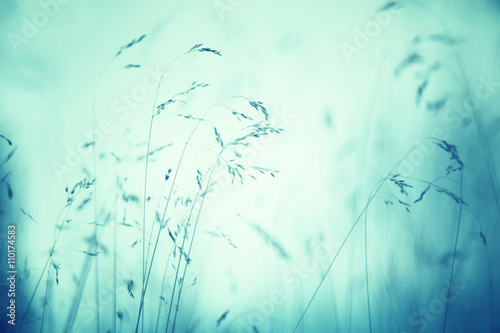 Turquoise green colored blurred meadow grass background. Selective focus used.