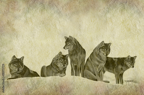 Hand painted illustration of a pack of wolves on rustic parchment background Fototapeta