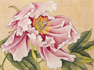 Obraz na Szklebright flower peony