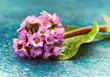 Spa composition with pink flowers