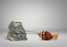 Snail Pulling Big Stone, Slowly Persistence Concept