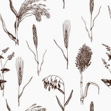 Vector Seamless Pattern With Hand Drawn Cereal Crops Sketches. Vintage Background With Industrial Crops Illustration. Farm Fresh And Locally Grown Organic Products Illustration.