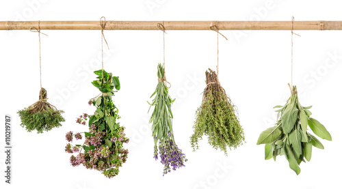 Herbs fresh hanging isolated white background
