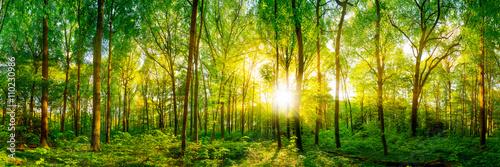 Poster Forets Wald Panorama im Sonnenschein
