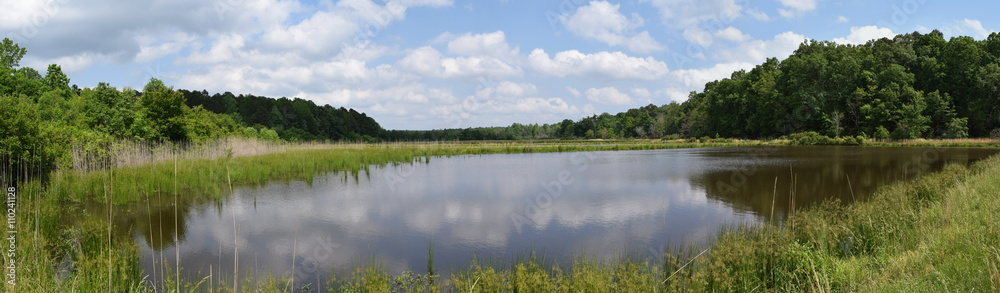 Fototapety, obrazy: Pond in Mississippi in May