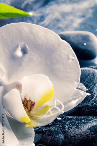 Fotografía  Delicata Orchidea