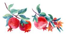 Watercolor Pomegranate Bloom B...